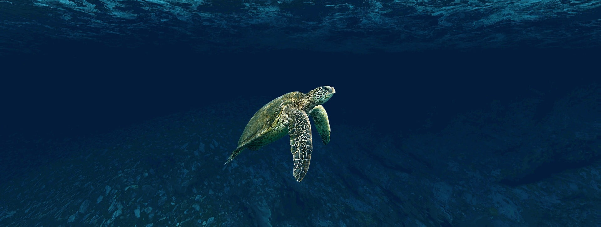 Turtle, Belize